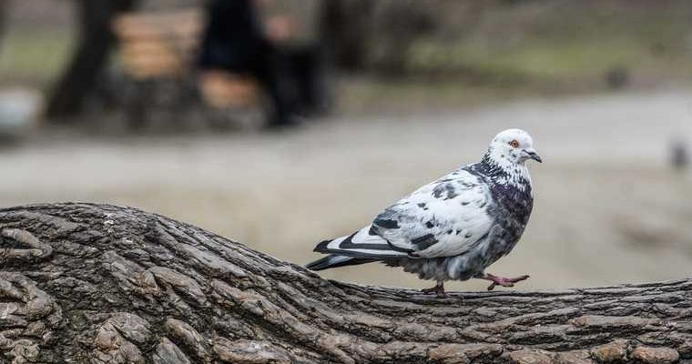 накорми голубей Тюмень акция