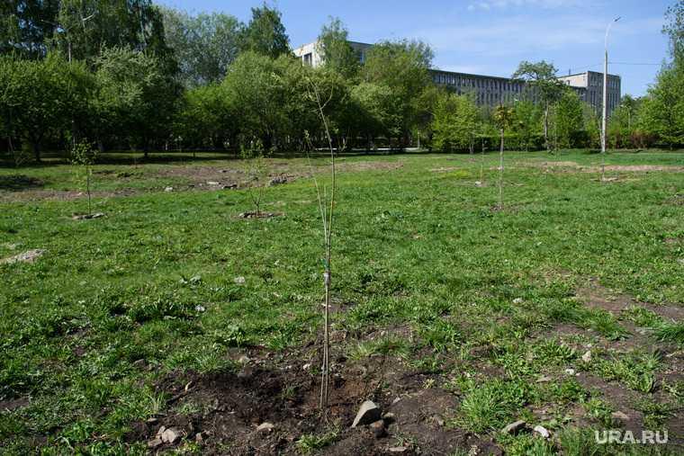 Мэрия Екатеринбурга парк УрГУПС вырубка деревьев