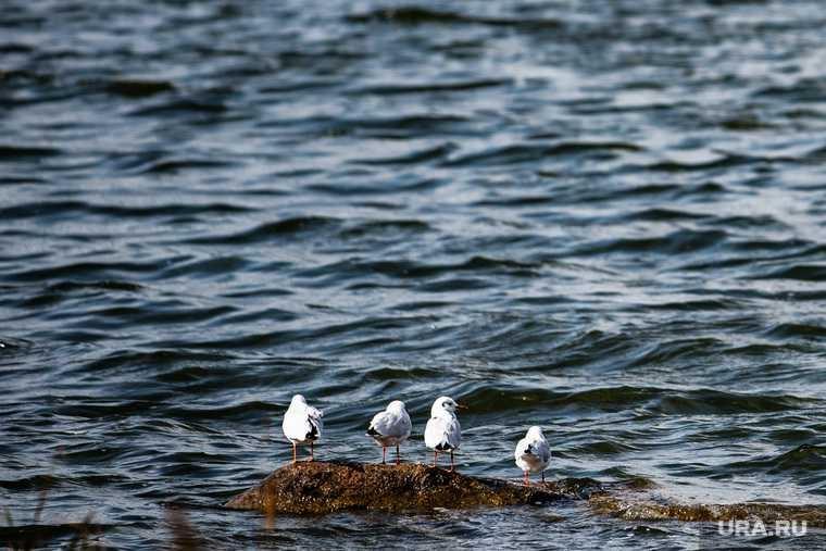 В реках камчатки нашли огромное количество загрязняющих веществ
