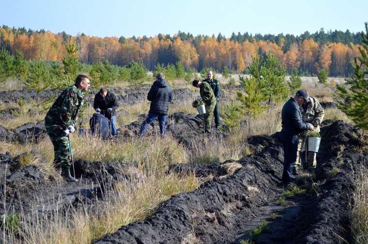 В России начали выполнять поручение Путина по спасению лесов