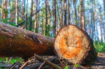 нелегальный вывоз леса из УрФО
