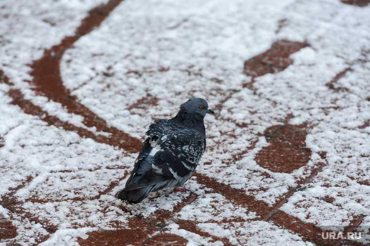 Челябинская область Челябинск погода прогноз выходные 15 16 апреля снег дождь температура похолодание