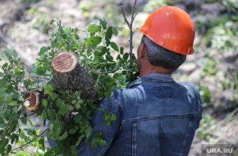 Председатель ТСЖ вырубил деревья