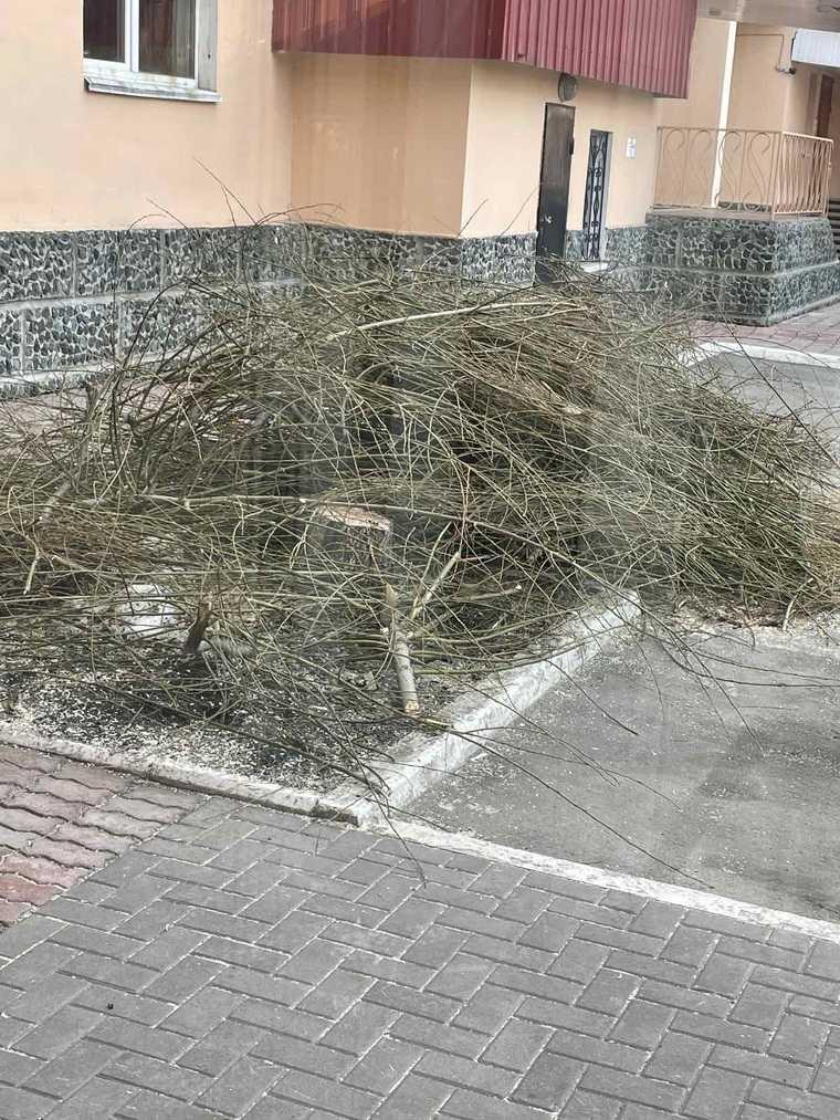 Тюменец самовольно спилил деревья во дворе элитной многоэтажки