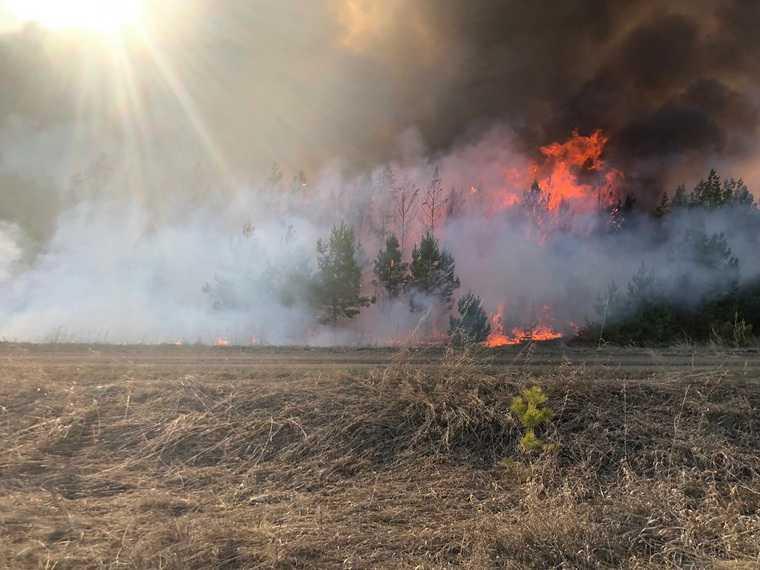 В курганском районе сгорела тысяча гектаров леса. Фото, видео